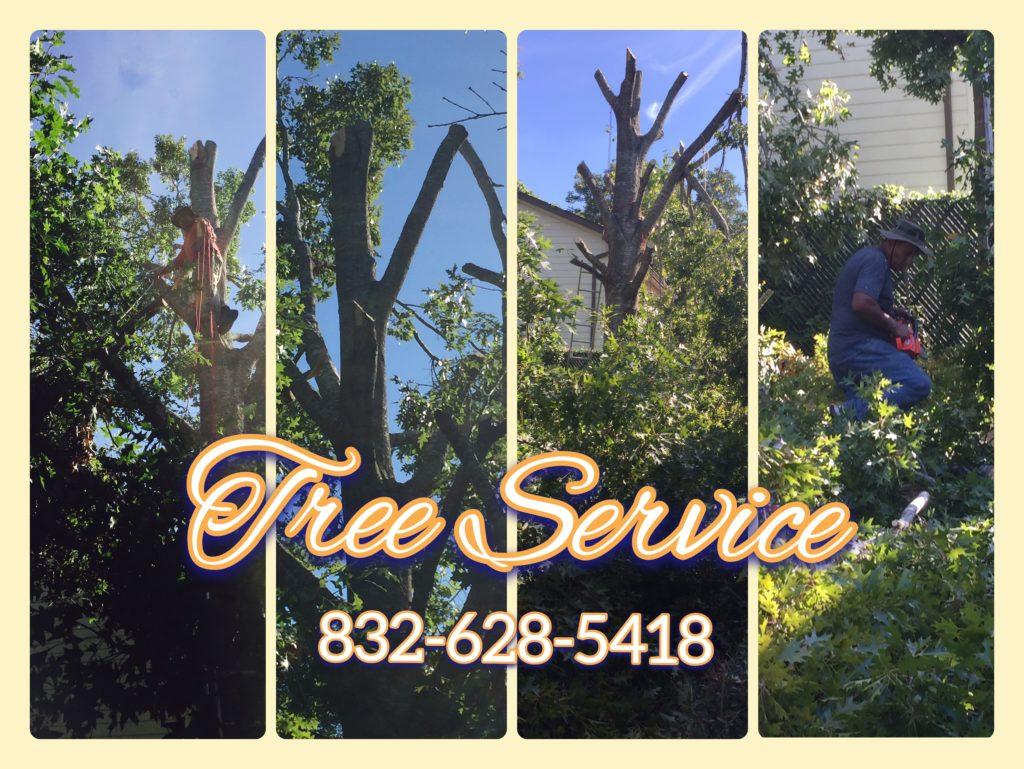 Tree service stump grinder
