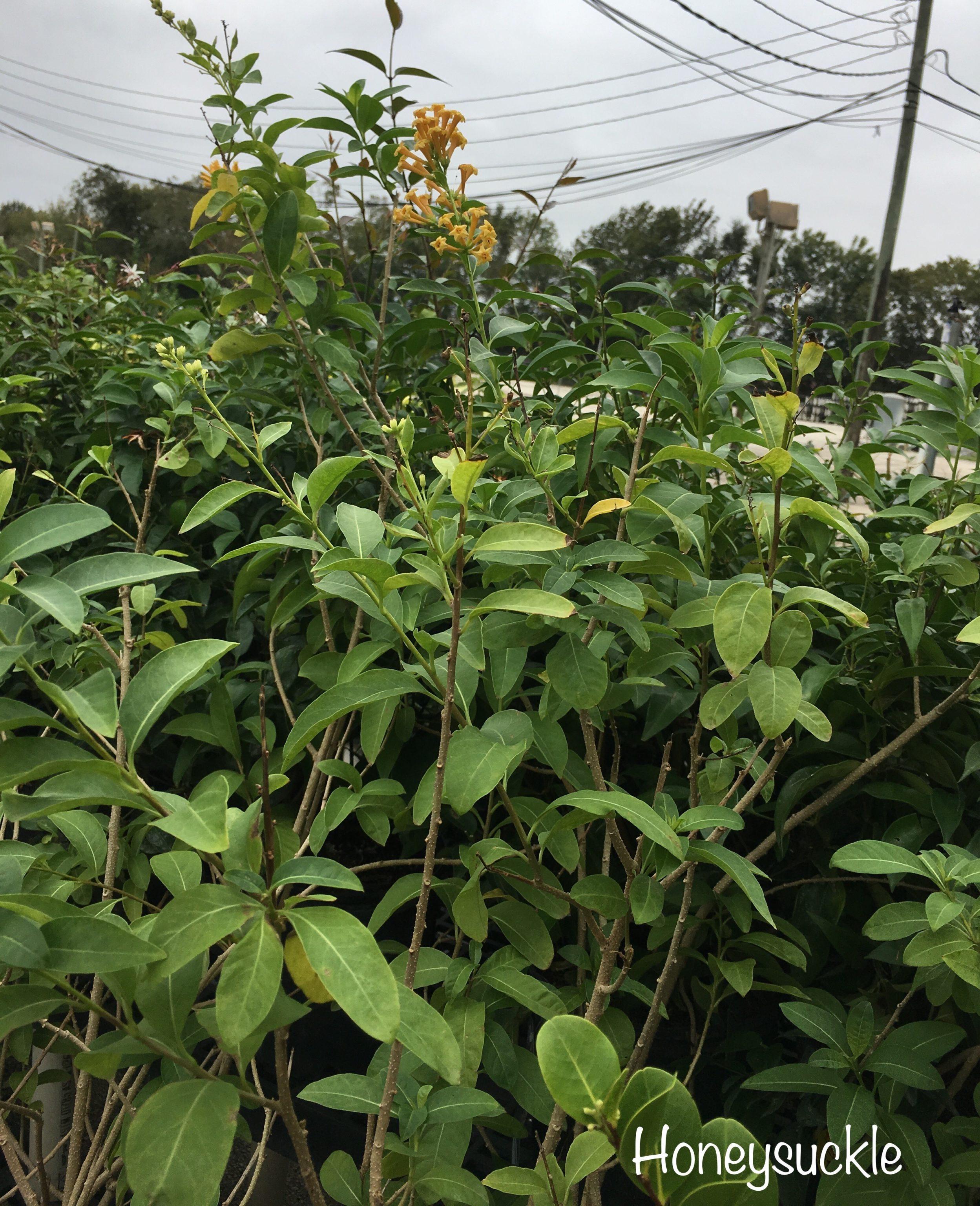 bushes flowers for landscape