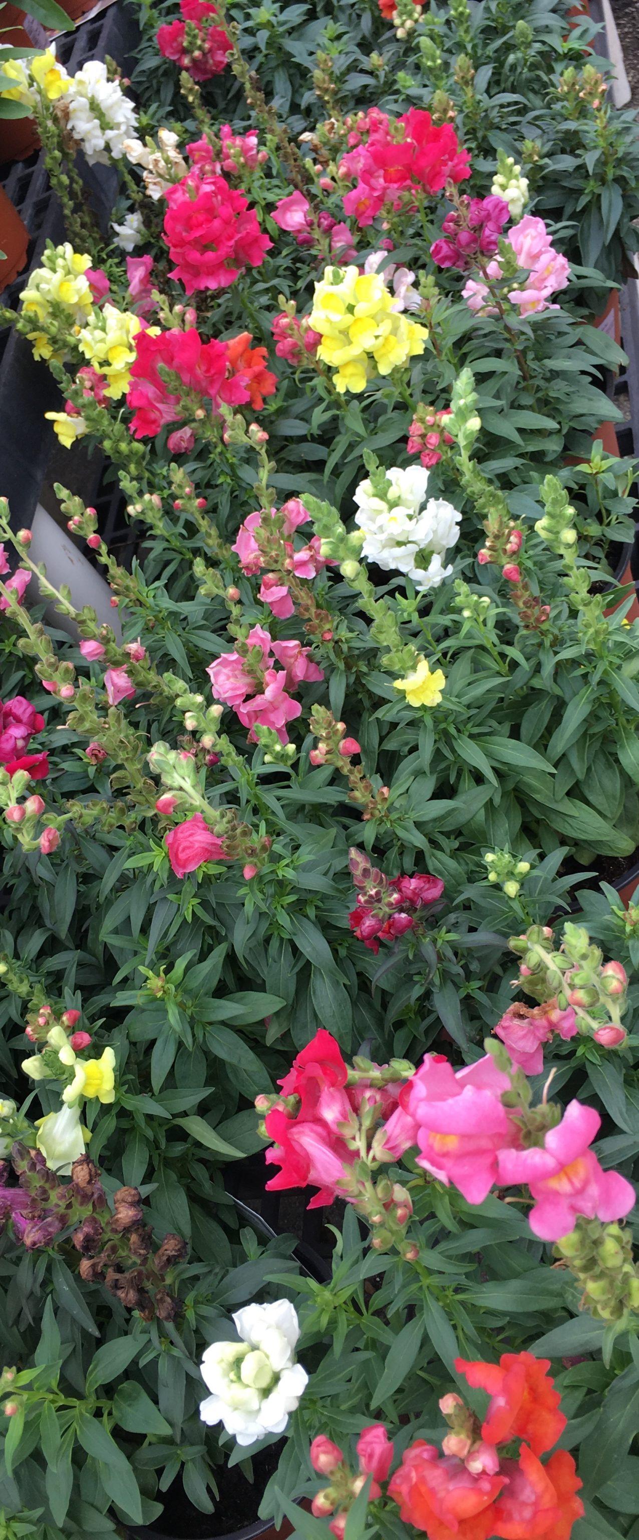 flowers for landscape