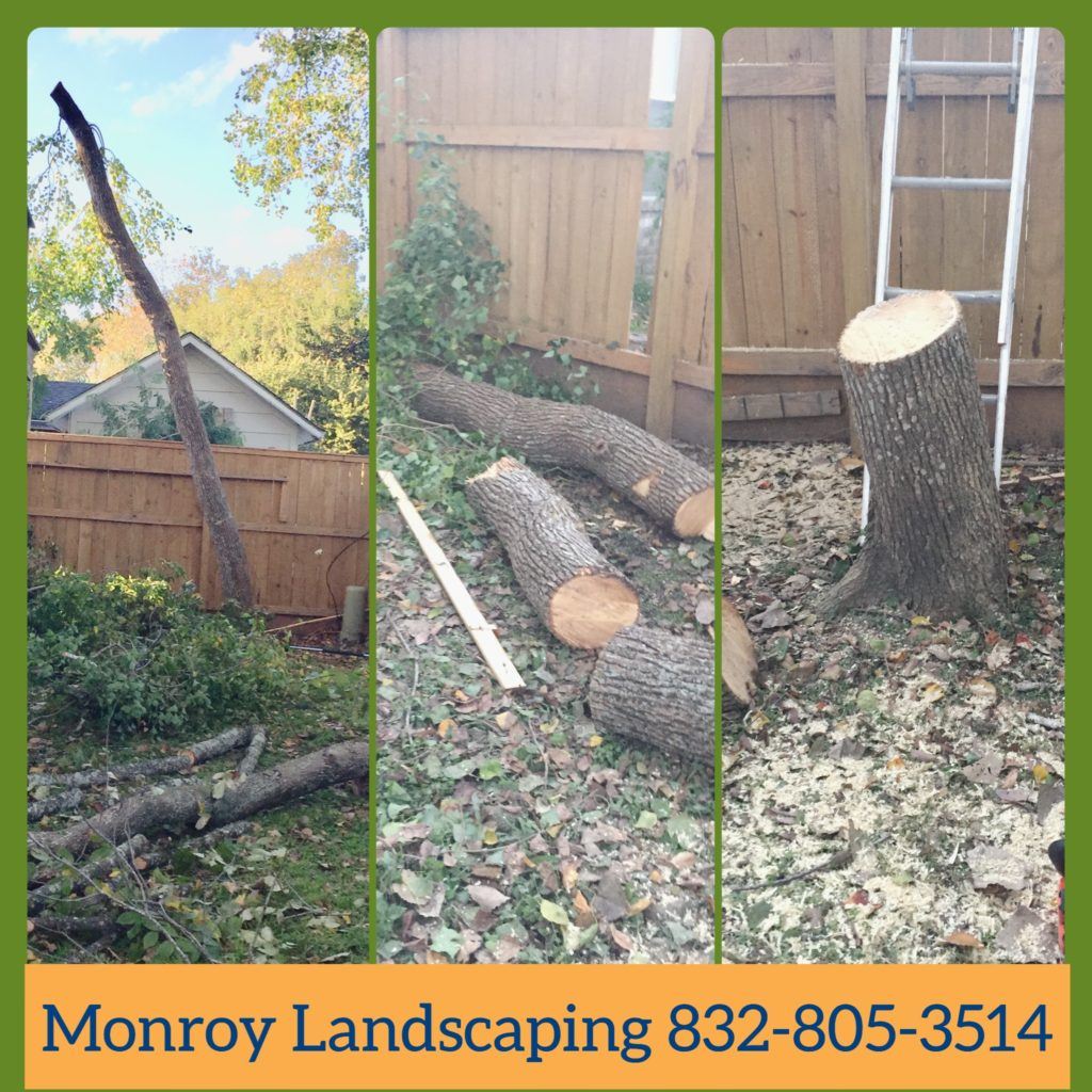 tree service, manvel, fresno, pearland